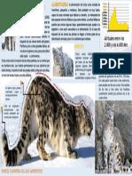 LEOPARDO DE LAS NIEVES.pdf