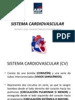 Clase Vi Sistema Cardiovascular