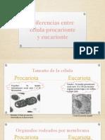 Diferencias entre célula procarionte y eucarionte