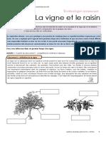 LA_VIGNE_ET_LE_RAISIN_eleve-5