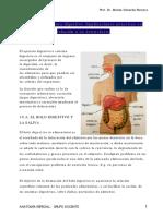 10. Sistema digestivo