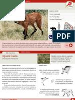 003-aguara-guazu.pdf
