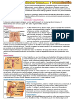 Sistema reproductor y fecundación