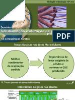 BioLOGIATrocasGasosasMulticelulares