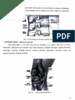 Anatomie 1.pdf