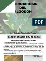 12.1. ALTERNARIOSIS DEL ALGODON  - ANTRACNOSIS- PPT