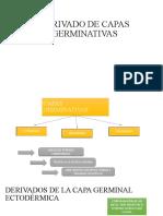 DERIVADO DE CAPAS GERMINATIVAS
