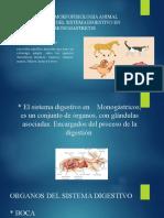 TALLER 1 MORFOFISIOLOGIA ANIMAL.pptx