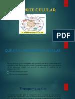 Transporte celuluar.pptx