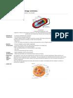 bio prelim summary.pdf
