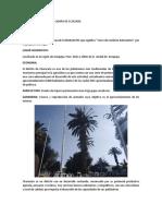 INFORME DE LA SALIDA DE CAMPO DE ECOLOGIA