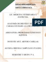 ANATOMÍA DE DIENTES Y EDAD DEL CABALLO EN BASE A LA DENTADURA BORRADOR