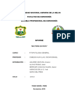 INFRORME DE BACTERIAS - copia