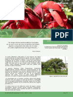 CEibo_-Botanica_y_sociedad_B_Biologica35.pdf