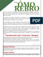 COMO FUNCIONA EL CEREBRO EQUIPO 1