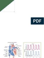 CVS Diagrams