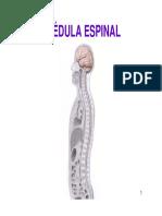 Tema 16 MÉDULA ESPINAL.pdf