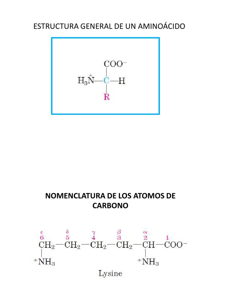 Caracteristicas De Los Aminoacidos
