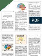 folleto de morfo 5