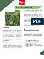 NTF-18-S07-Virus-Mosaico-del-Pepino