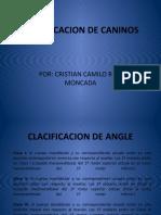 CLACIFICACION DE CANINOS