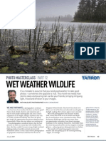 wet weather wildlife photography