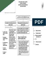 Organizador grafico-Educacion preescolar