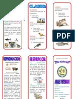 TRIPTICO ANIMALES VERTEBRADOS.doc