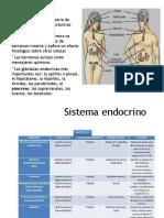 Neurotransmisores diapositivas