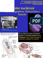 ácidos nucleicos  2019-2 (1).pdf