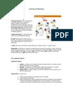 Anatomy-and-Physiology-SLE-1