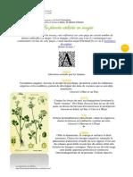 proprietes-esoteriques-des-plantes-1