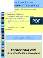 Lecture 16 Escherichia coli.ppt