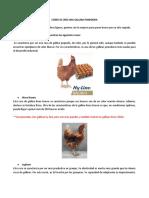 Cómo se cría una gallina ponedora