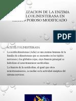 INMOVILIZACION DE LA ENZIMA ACETILCOLINESTERASA EN SILICIO POROSO