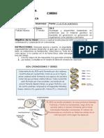 Biología 2°Medio Guía ADN y cromosomas