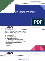 Crecimiento y desarrollo facial prenatal
