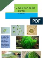 clase N9 origen y evolucion de las plantas
