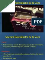 anatomiayfisiologiaanimal-