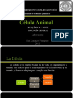 célula animal.pptx
