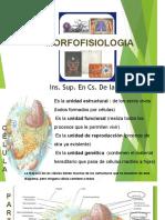 Morfofisiologia- Celula