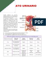 aparatourinario.pdf