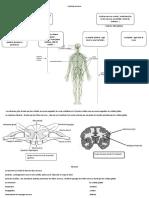 Système nerveux.docx