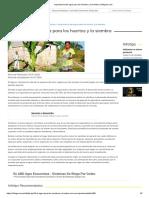 Importancia del agua para los huertos y la siembra _ Infoguia.com.pdf