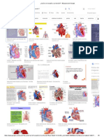 ¿Qué es el corazón y su función_ - Búsqueda de Google