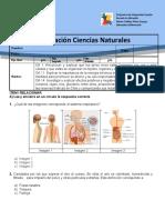 PRUEBA DE CIENCIAS NATURALES 5