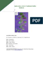 Acalypha indica - medicinal properties