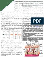 8°Los receptores sensoriales. (3)