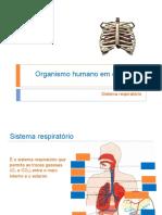 Sistema respiratório2020