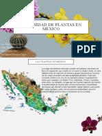 Diversidad de plantas en México